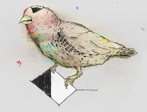 bird2222